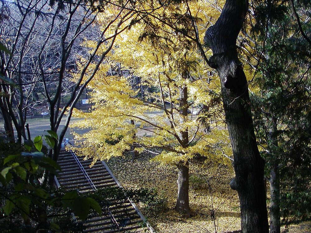 Park Trees by blaine