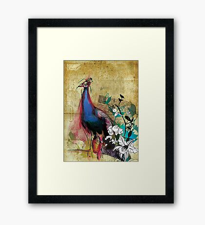 king peacock Framed Print
