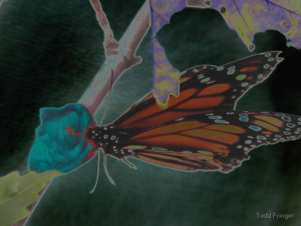Butterfly Chaos  by Todd Fringer