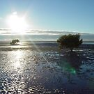 Lone tree on tidal flat by Jayson Gaskell