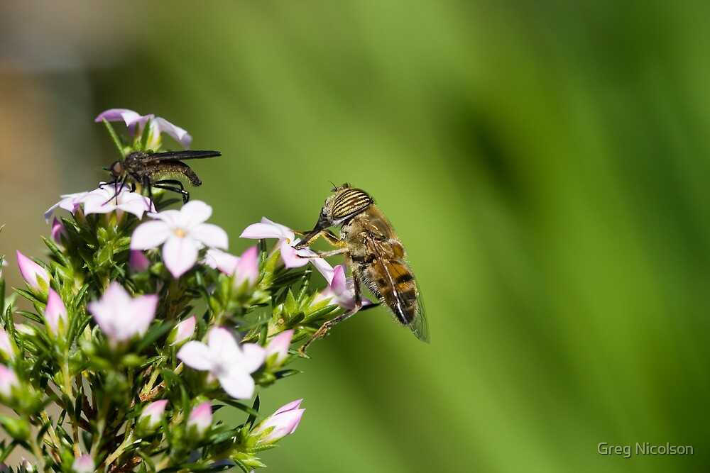 Pollination by Greg Nicolson