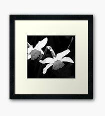 Daffodils Framed Print