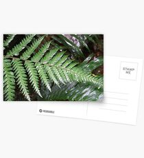 Fern Postcards
