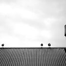 Birds on a roof by Matthew Bonnington