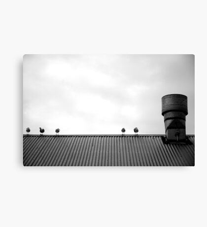Birds on a roof Canvas Print