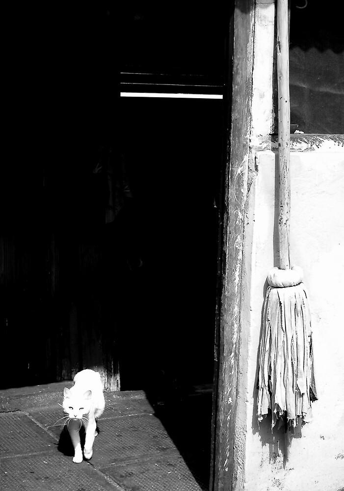 Black+White by Geoff46