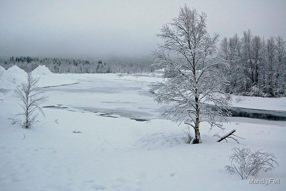 Frozen forest by Mandy Fell