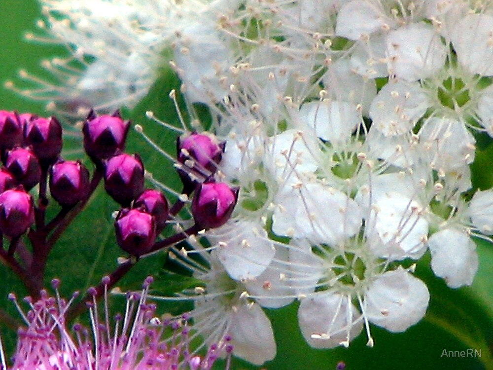 Details of floral life by AnneRN