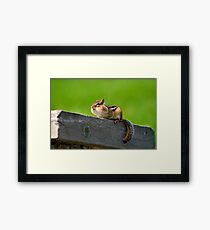 Don't tuch my nuts Framed Print