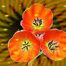 THREE RED FLOWERS by juliecat