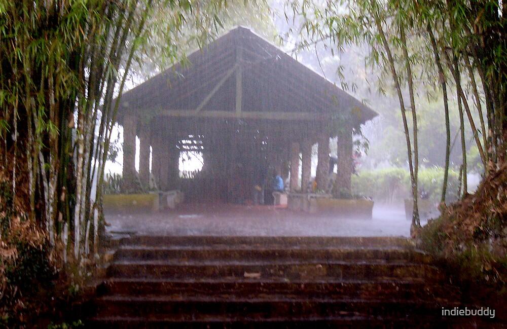 Bamboo Rain by indiebuddy
