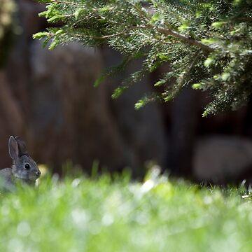 Bunny by KyleWalker