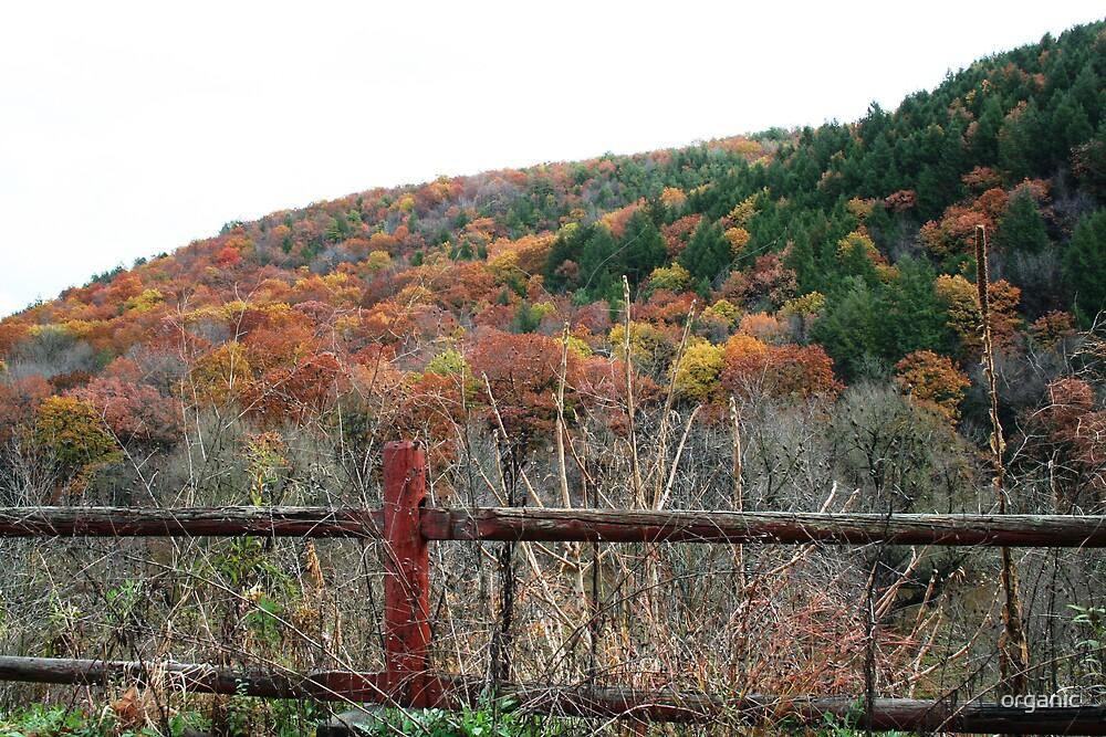 Pennsylvania Autumn by organic