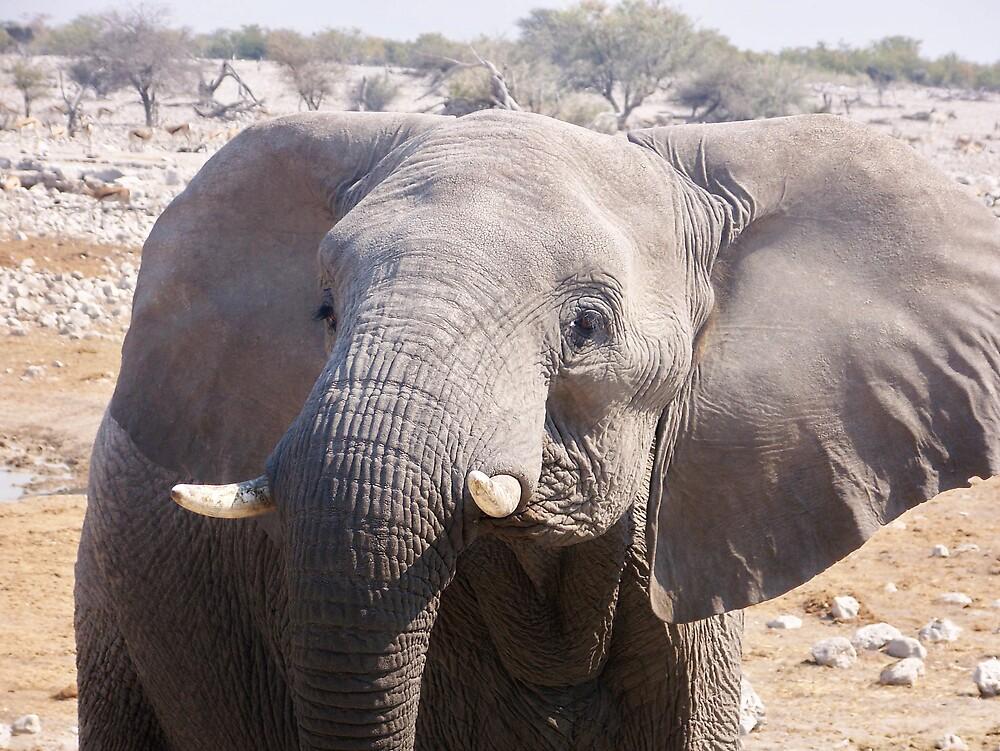 Elephant by tj107