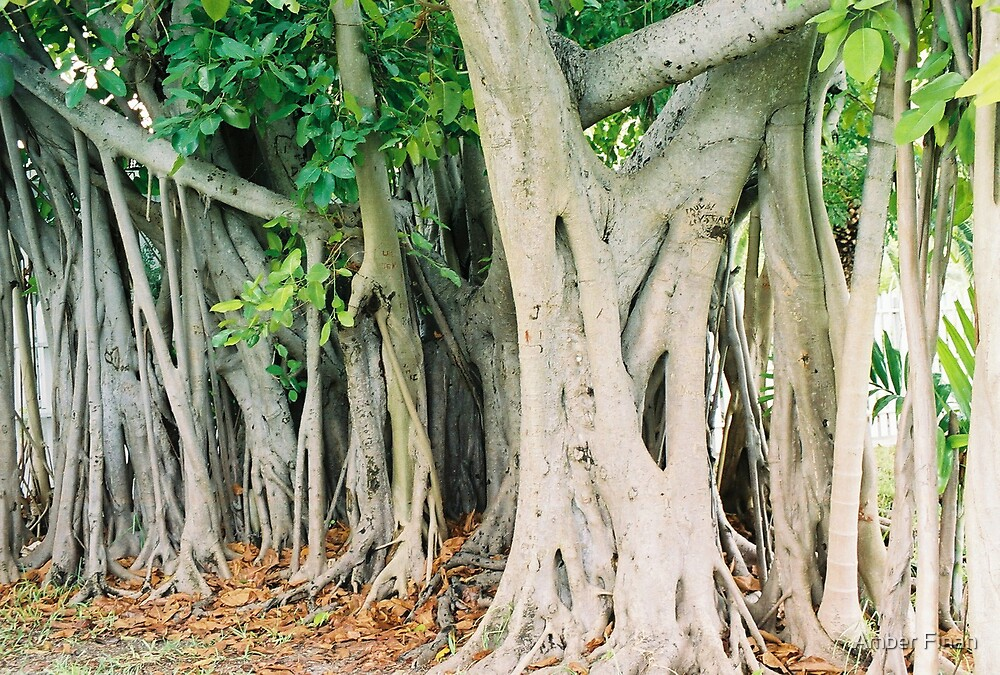 Roots- Foundation of life by Amber Finan