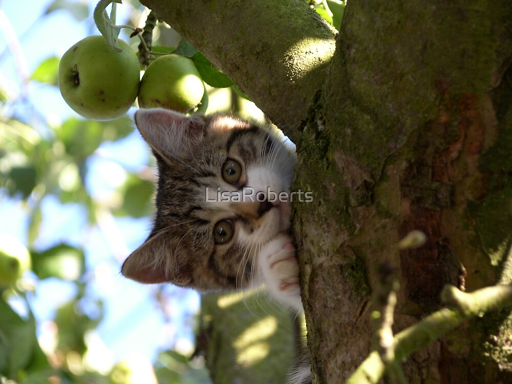 What cats do best! by LisaRoberts