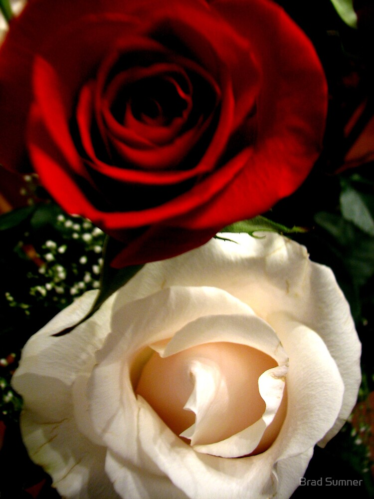 Red and White Rose by Brad Sumner