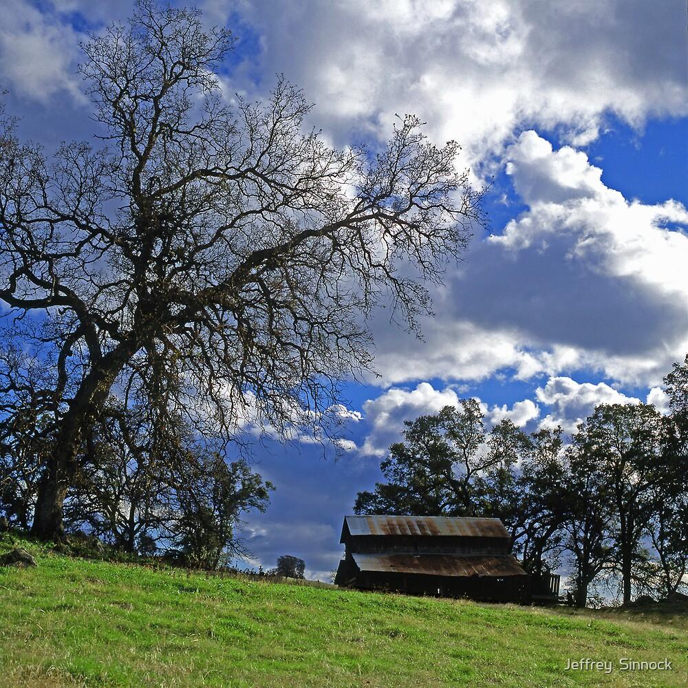 Barn and oak tree by Jeffrey  Sinnock