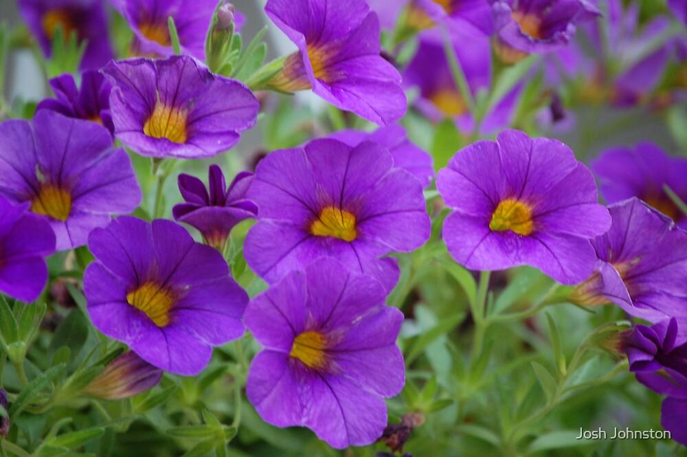 Purple in Bloom by Josh Johnston