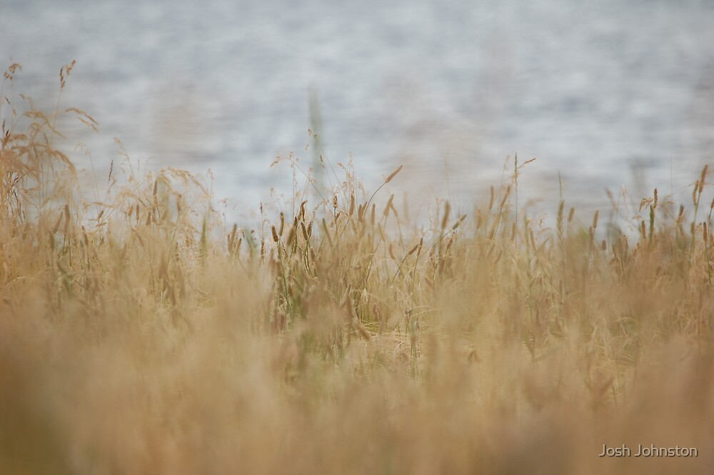 Grass blowing in the wind by Josh Johnston