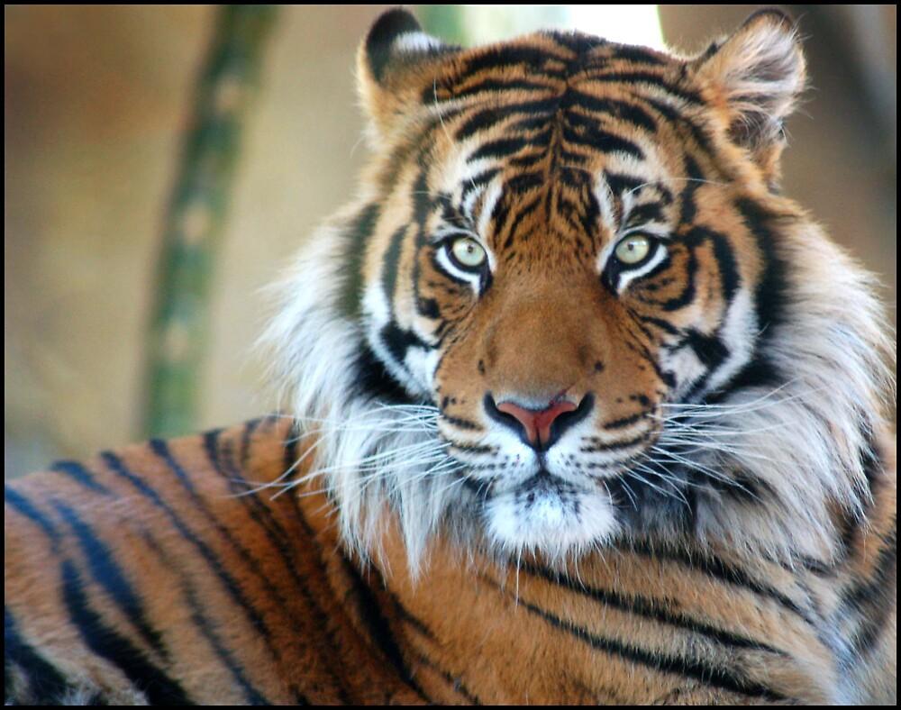 Tiger Eyes by Gemma Palmer