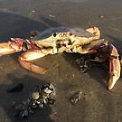 Mr Crab by Jacker