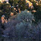 Cottonwood Dawn, Prescott Lake, Prescott, AZ by Wayne King