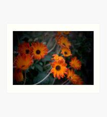 Daisys, Daisys, Daisys Art Print