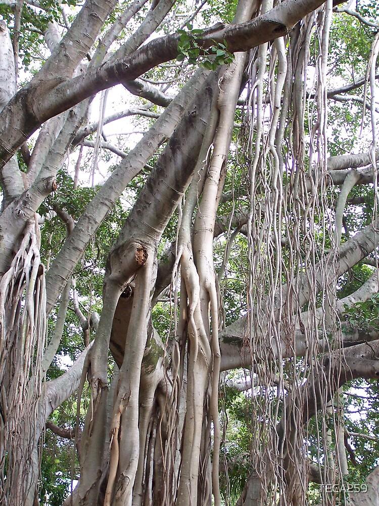 Tree by TECA259