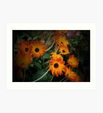 Daisys, Daisys, Daisys, Daisys Art Print