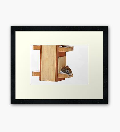 Anyplace is home when it's cold - Red Squirrel Framed Print