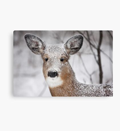 I hate snow! - White-tailed Deer Canvas Print