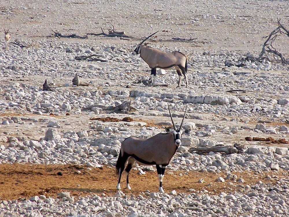Oryx Reflection by tj107