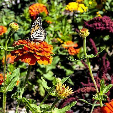 Monarch by MCHerdering