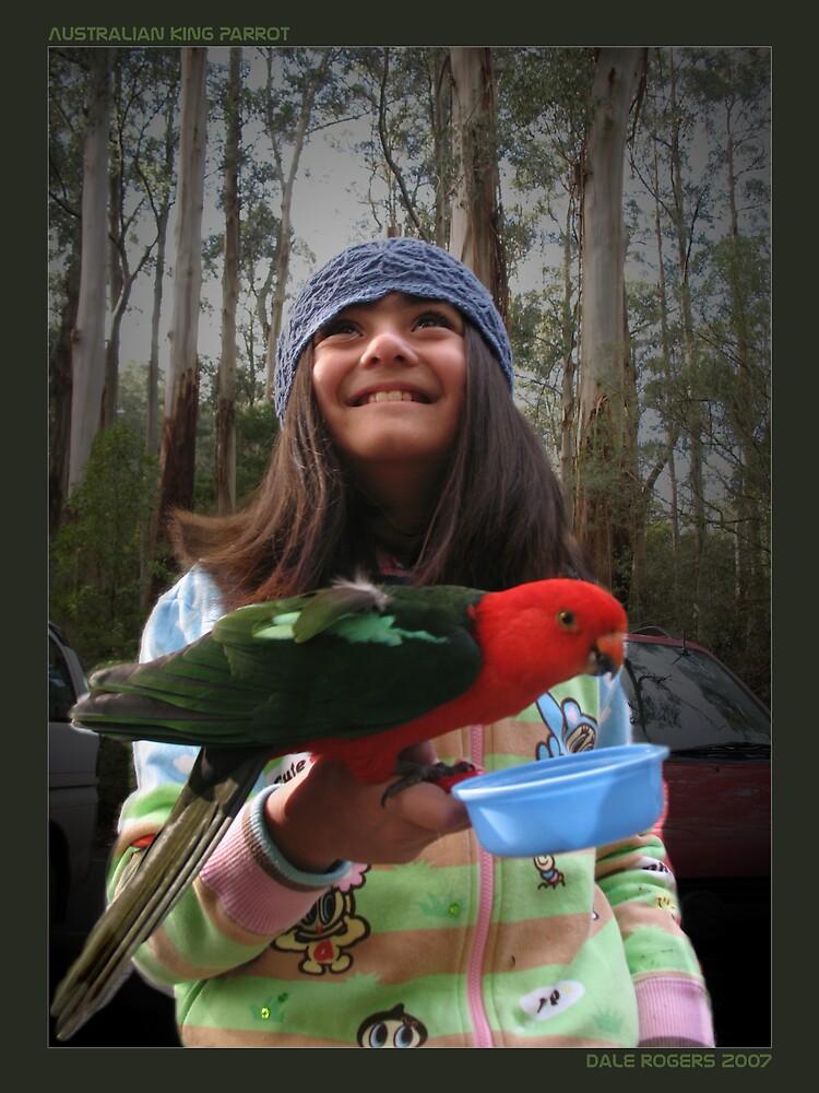 Australian King Parrot by Photo Rangers