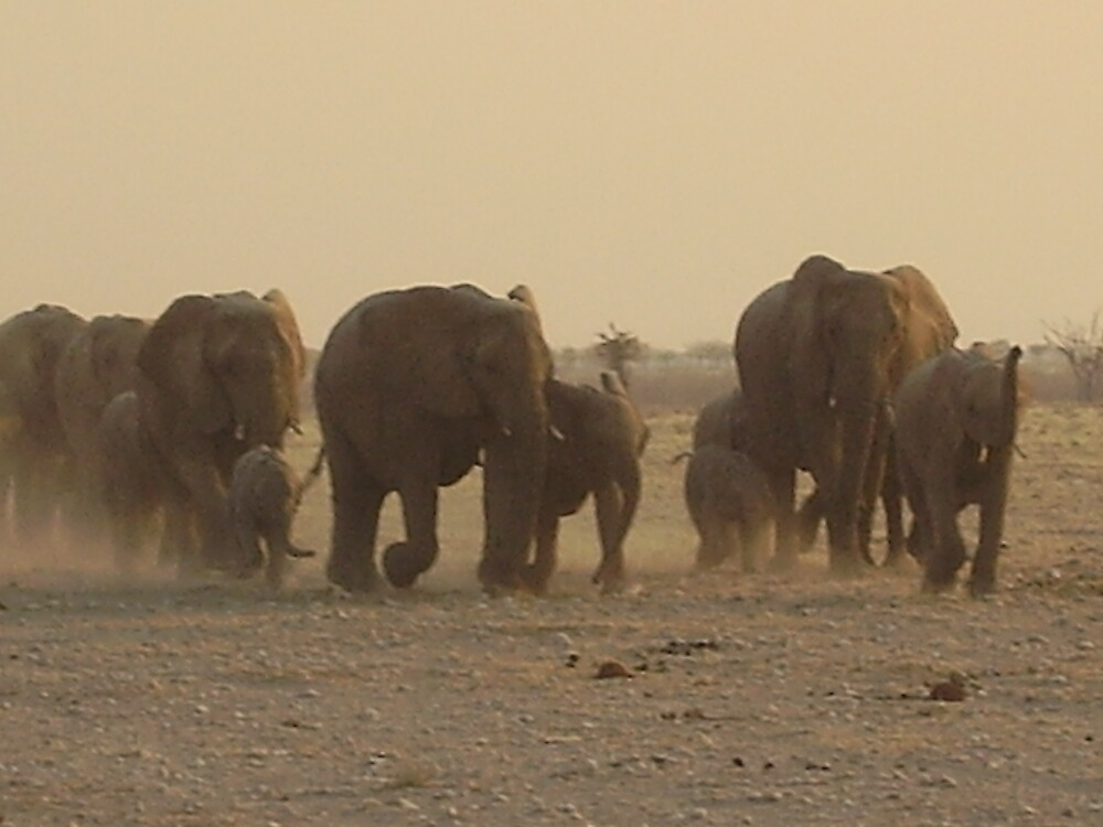 elephants on the rampage by mj007