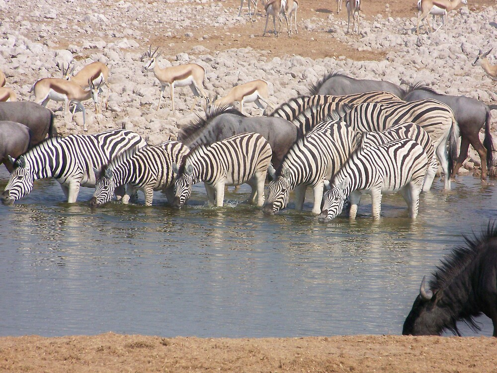 Game at the Waterhole by tj107