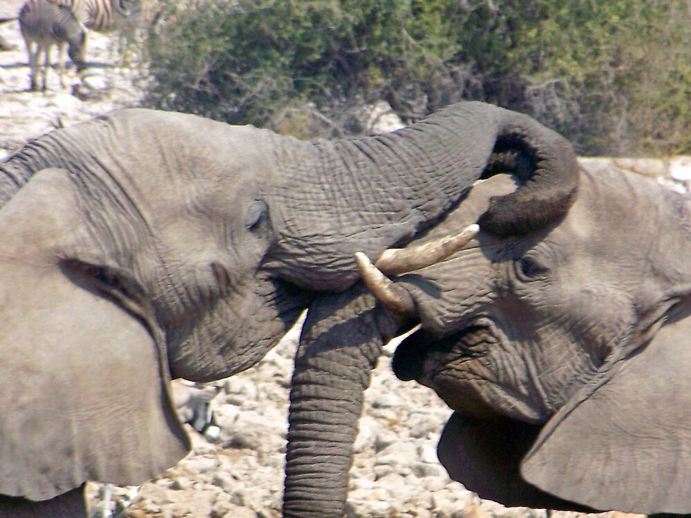 Elephants Playing by tj107
