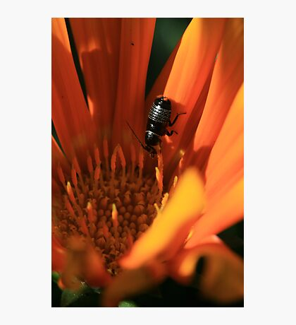 Flower Bug Photographic Print