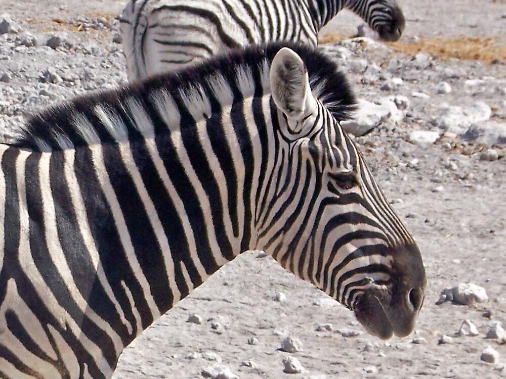 Zebra Head by tj107