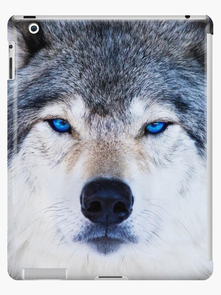 Blue Eyed Wolf\