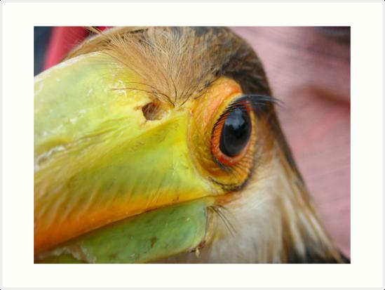 Bird Eye by yiorgo