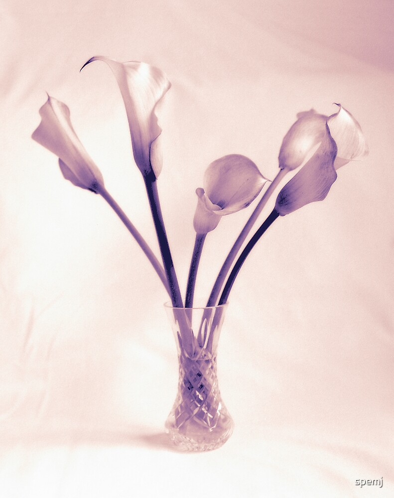 Arum Lillies by spemj