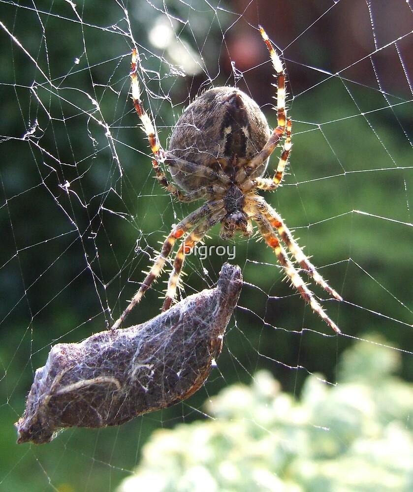 garden spider by bigroy