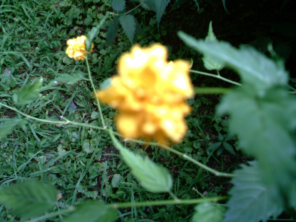 Yellow flower! by volcomgrl17