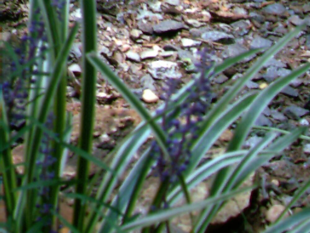 purple! by volcomgrl17