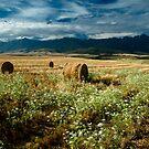 Harvest time by Viv van der Holst