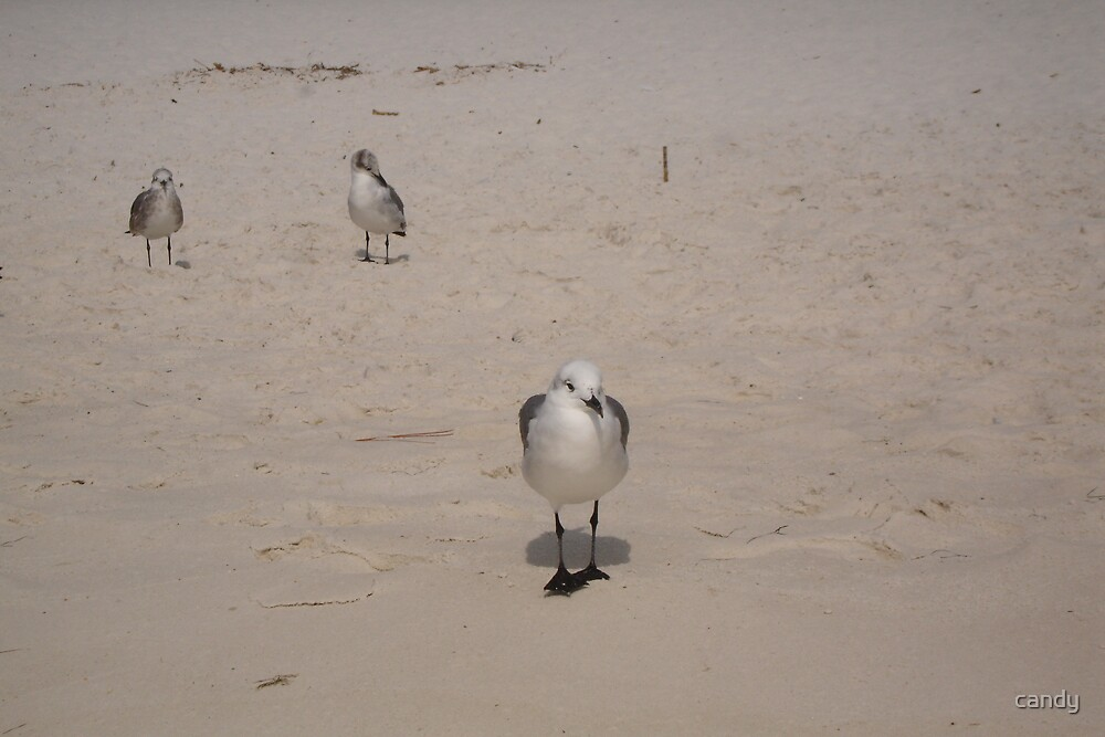 Alabama seagull by candy