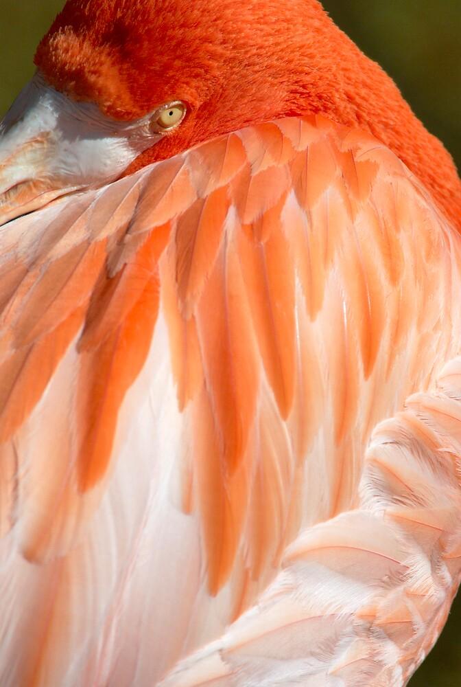 Pink Flamingo by jayobrien