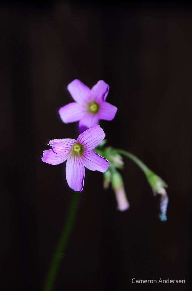 Pretty little flowers. by Cameron Andersen
